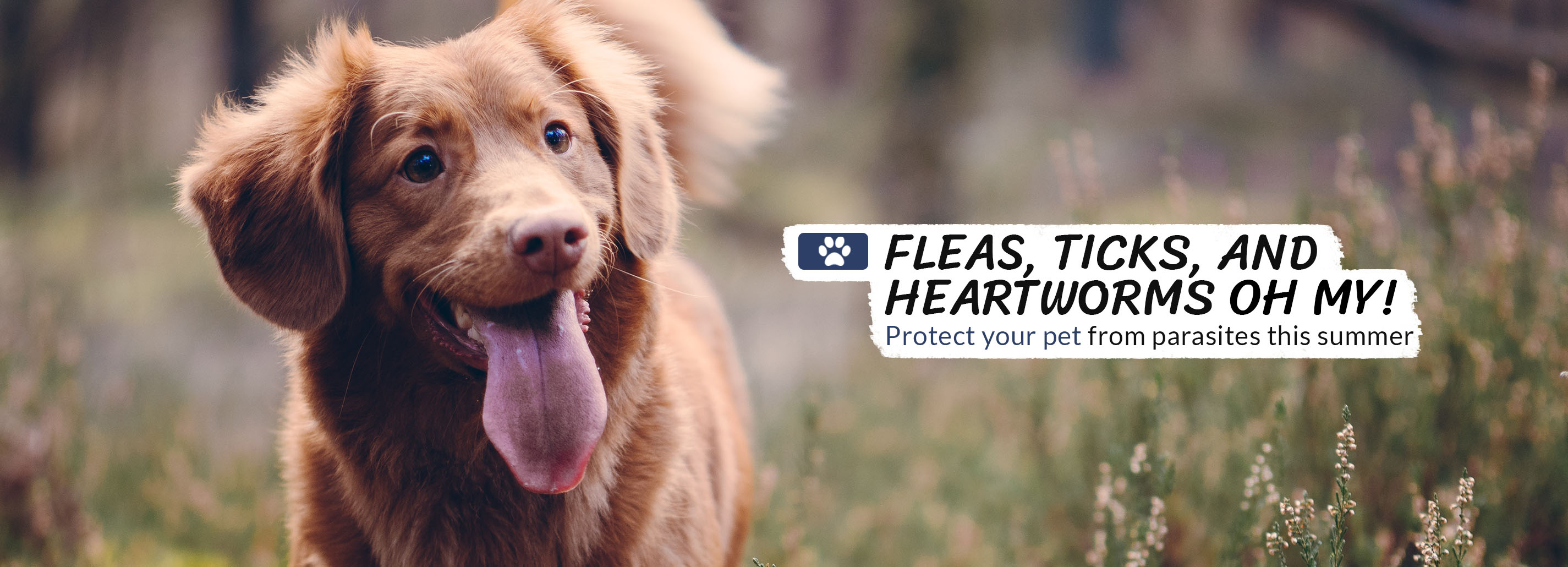 Fleas, Ticks and Heartworms Oh My
