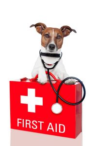 Affordable Emergency Vet Care