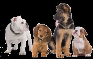Extirpación de tumores en perros