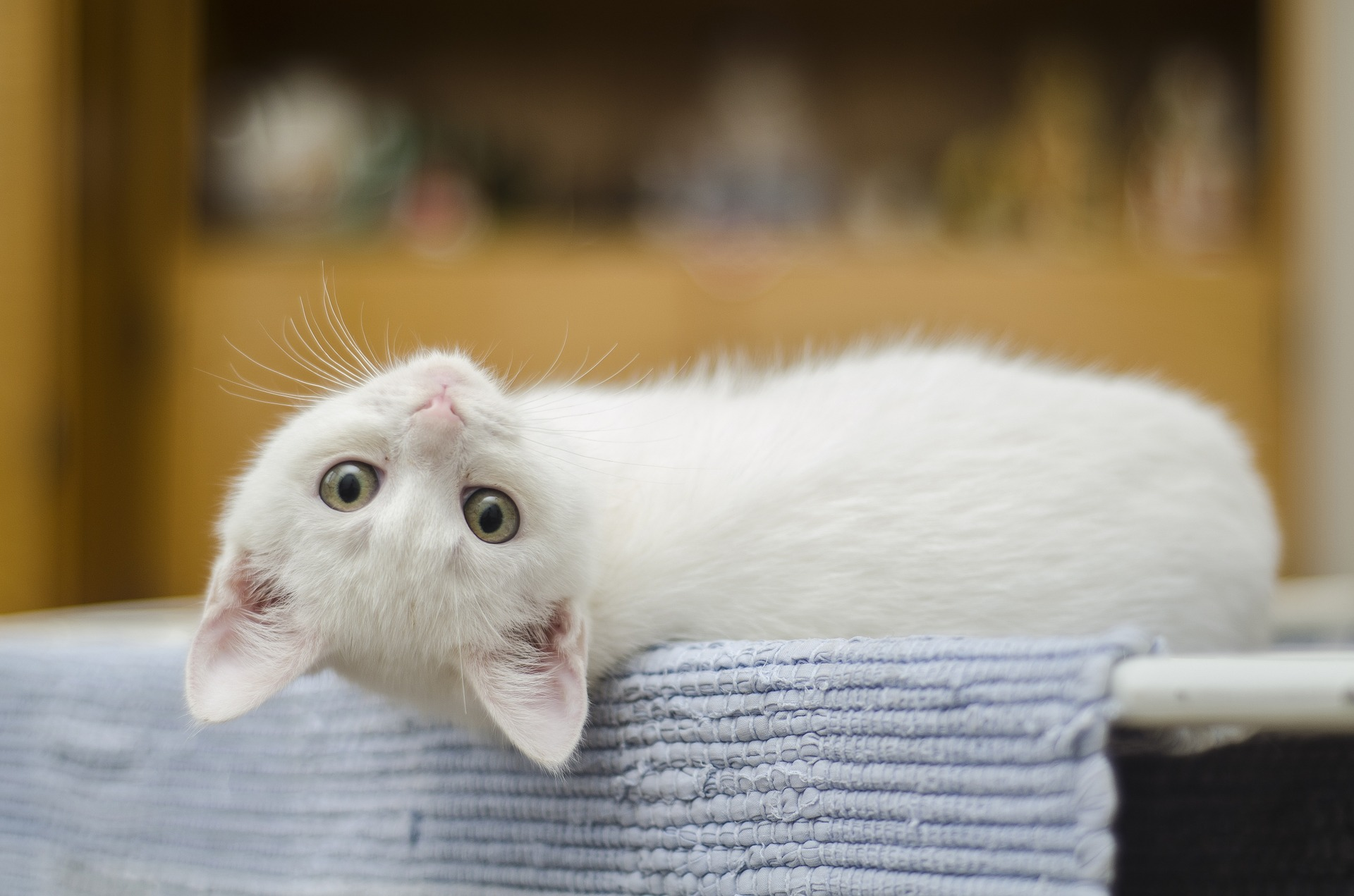 Complete Guide to Your Kitty's First Vet Visit